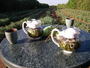 plantation bio agadir evenementielsbio